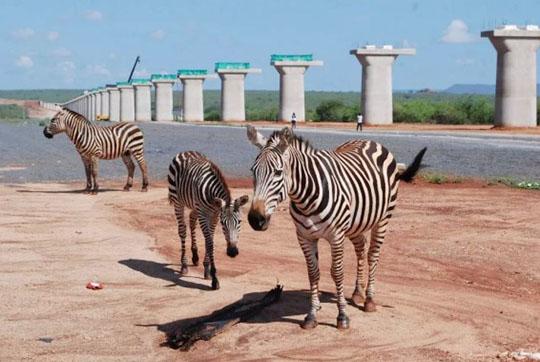 肯尼亚总统高度赞赏,乞力马扎罗山下山河绿闪耀